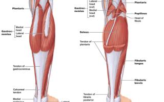 Упражнения для подъема стопы