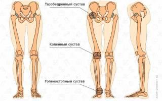 Мышцы и сухожилия ног человека