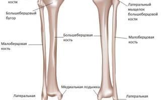 Перелом берцовой кости сколько ходить в гипсе