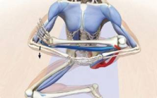 Как растянуть приводящие мышцы бедра