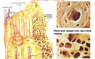 Что надо есть при переломах костей