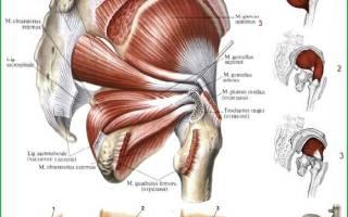 Вертельные сумки средней ягодичной мышцы на латыни