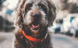 Сульфасалазин для собак