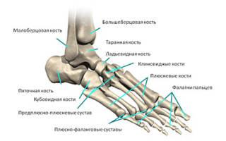 Плюсневая кость ноги