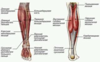 Как вытянуть ноги в длину